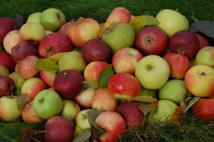 Epler, foto Finn Måge