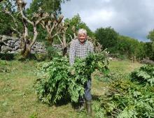 Kulturlandskap i jordbruket