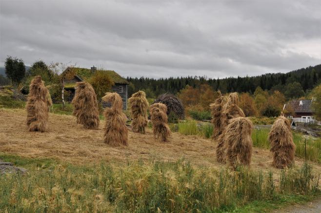 Kornåker, kornstaur, De Heibergske Samlinger - Sogn Folkemuseum